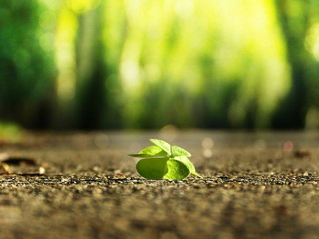 ネガティブな人はネガティブをあえて探しているだけであって、視点を変えればポジティブは目の前に溢れているもの